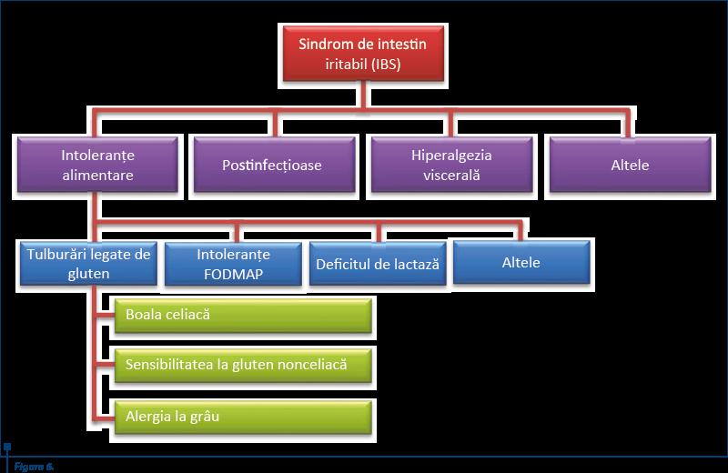 figura_6_clasificarea_fiziopatologica_a_sindromului_de_intestin_iritabil_4483_0_90_bigger.png
