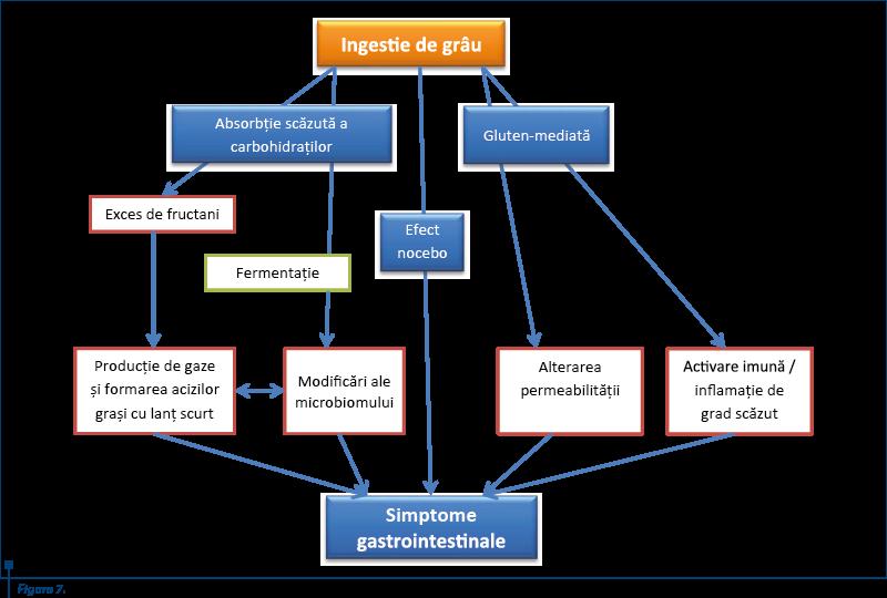 figura_7_mecanism_patogenic_propus_pentru_ncgs_dupa_eswaran_s_2013_si_vasquez_roque_m_i_2013_4482_0_90_bigger.png